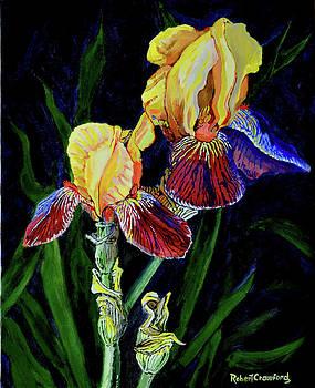 Yellow Aris by Bob Crawford
