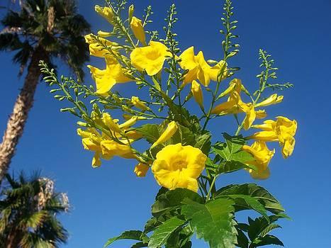Yellow Bells by Jonathan Barnes