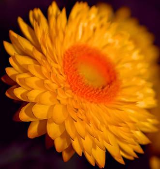 Michelle Cruz - Yellow Bliss