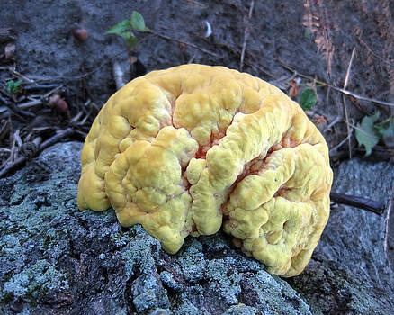 Yellow Brain Mushroom by Charles Dancik