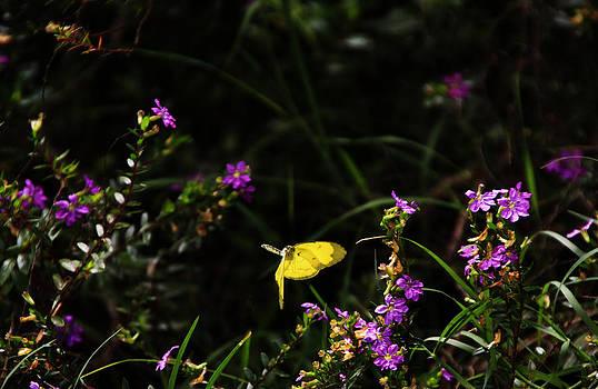 Noel Elliot - Yellow Butterfly in Flight