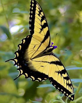 Jennifer Lamanca Kaufman - Yellow Butterfly
