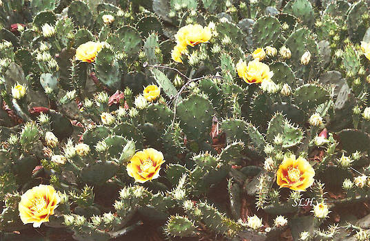 Yellow cactus by Lee Hartsell