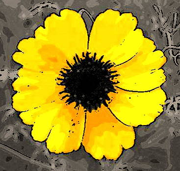 Yellow Coreopsis Flower by Amber Stubbs
