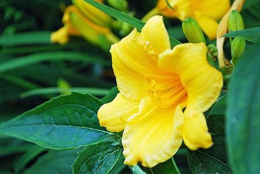 Gary Wonning - Yellow Delight
