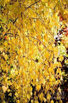 Yellow Fall by Leaetta Mitchell