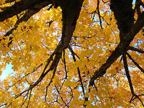 Baslee Troutman - Yellow Fall Trees prints Autumn Leaves
