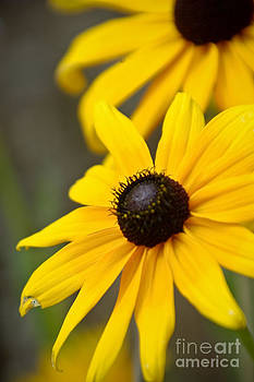 Yellow Flower by Leaetta Mitchell