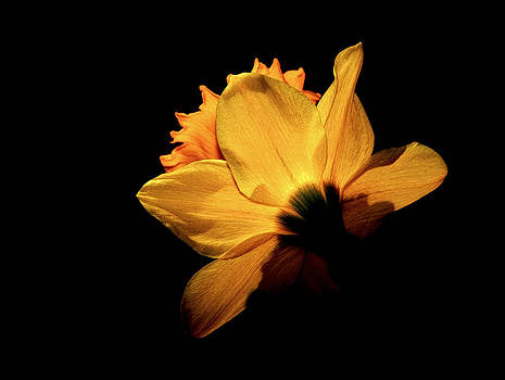 Yellow Flower  by Luis Baez