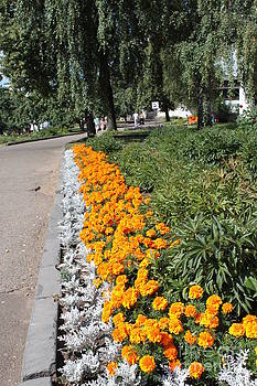 Yellow flowerbed by Evgeny Pisarev