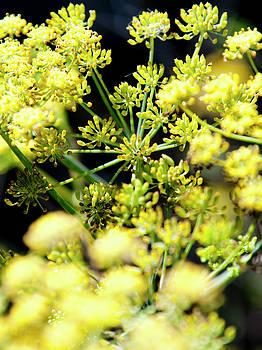 Gilbert Artiaga - Yellow Flowers