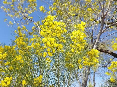 Yellow Flowers by Jonathan Barnes