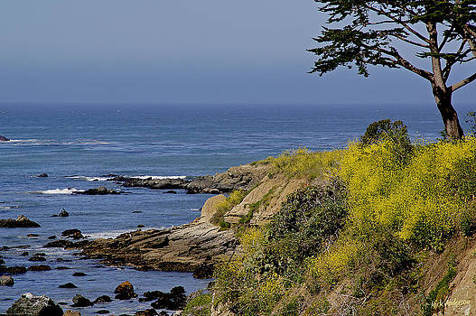 Mick Anderson - Yellow Flowers on the Central California Coast