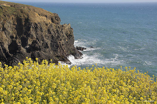 Mick Anderson - Yellow Flowers on the Northern California Coast