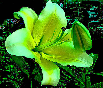 Roy Foos - Yellow Green Lily