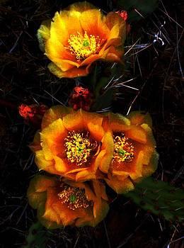 Yellow Harvest by Aliesha Fisher