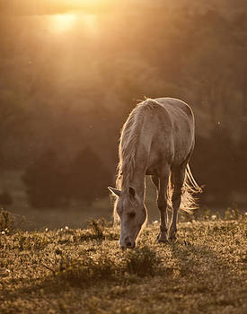 Yellow Horse Dawn by Ron  McGinnis
