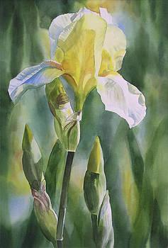 Sharon Freeman - Yellow Iris with Buds