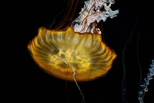 Yellow Jellyfish by Barbara Cary