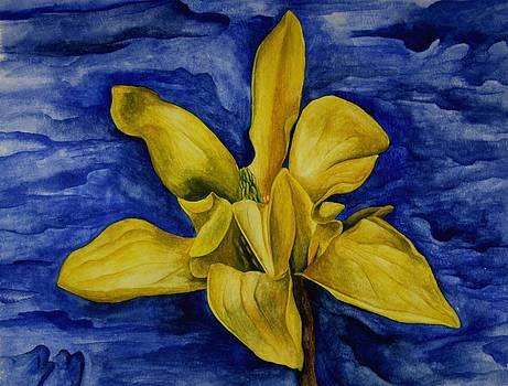 Yellow Magnolia by Robert Morin