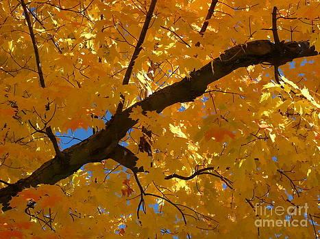 Christine Stack - Yellow Maple Branch
