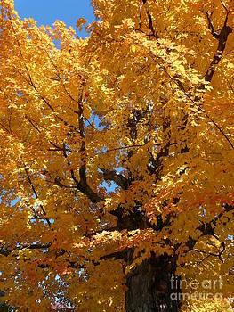 Christine Stack - Yellow Maple Tree