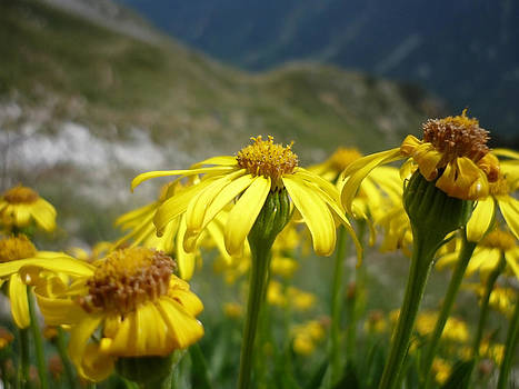 Yellow Mountain Flowers by Martin Marinov