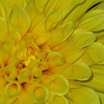 Yellow Nectar by Alison Richardson-Douglas