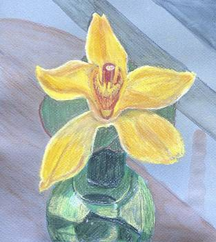 Yellow Orchid by Jennifer Woodworth