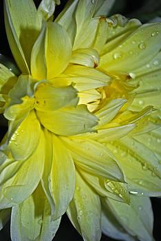 Michelle Cruz - Yellow Rain Drops
