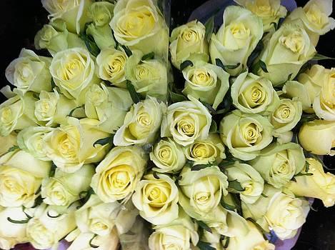 Yellow Roses by Anna Villarreal Garbis