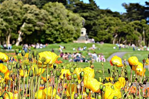 Yellow Spring by Sabrina Vera