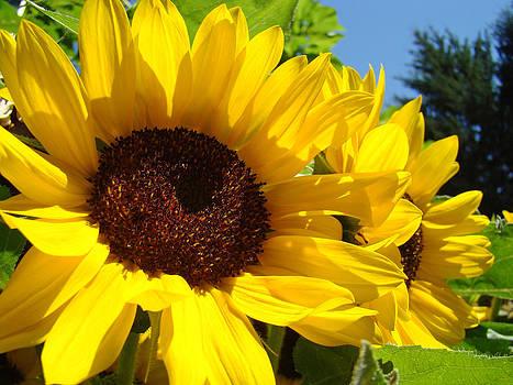 Baslee Troutman - Yellow Sunflowers art prints Summer SunFlower