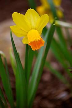 Michelle Cruz - Yellow Sunshine in the Garden