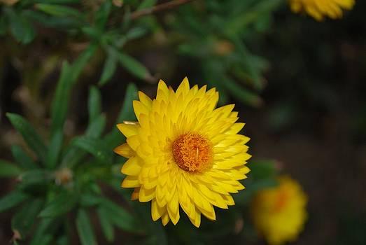 Michelle Cruz - Yellow Sunshine