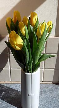 Baato   - yellow tulips again