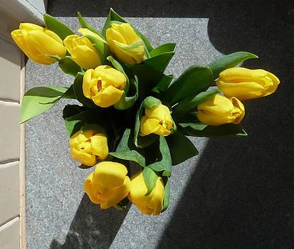 Baato   - yellow tulips