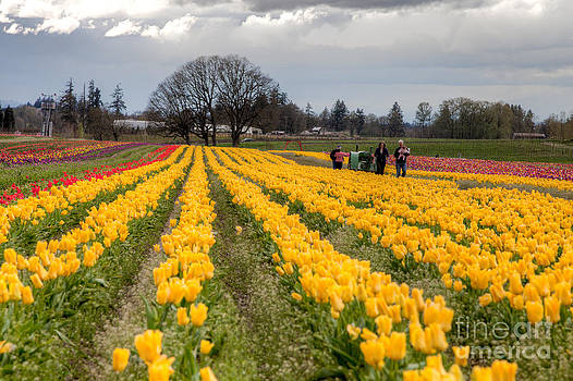 Yellow Tulips of Spring by Bdsmalley