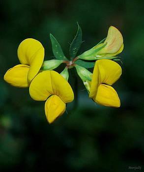 Yellows by Marija Djedovic