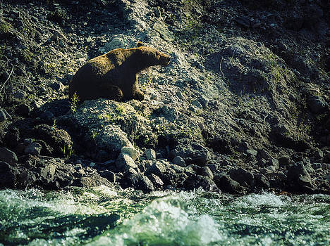 Yellowstone Grizzly by Stuart Deacon