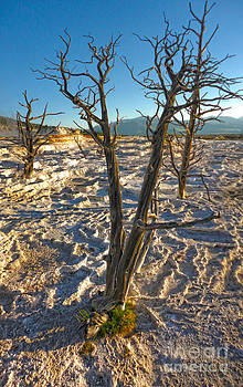 Gregory Dyer - Yellowstone National Park - Minerva Terrace - Dead Tree