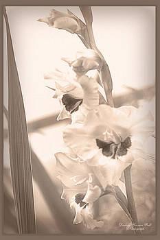 Darlene Bell - Yesterdays Gladiolus