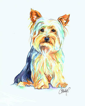 Christy  Freeman - Yorkie Dog Portrait