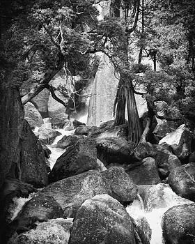 Ann Tracy - Yosemite