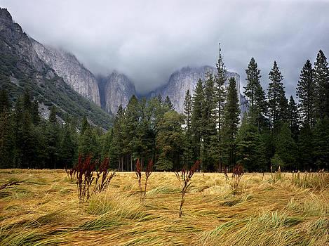 Yosemite Meadow by John Wolf