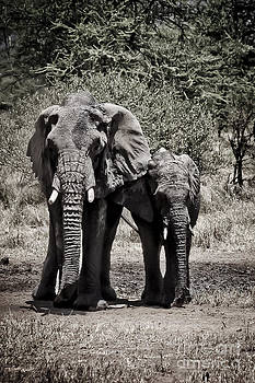 Darcy Michaelchuk - Young Elephant and Mom Abstract