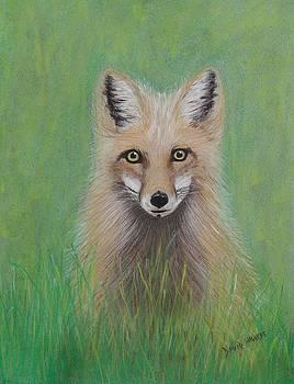 Young Fox by David Hawkes