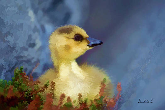 Young Gosling in Rock Shelter by Dennis Fast