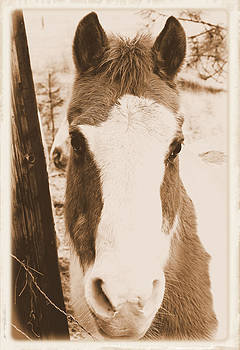 Young Horse Portrait - Albumen Style by Light Shaft Images