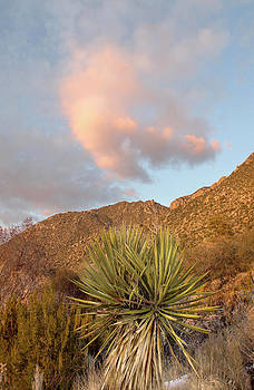 Nathan Mccreery - Yucca and Sandia Crest   Sunset